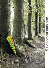 paraguas, colorido