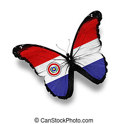 Paraguayan flag butterfly, isolated on white