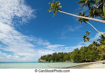 paraisos , areia branca, água azul, ilha tropical, praia