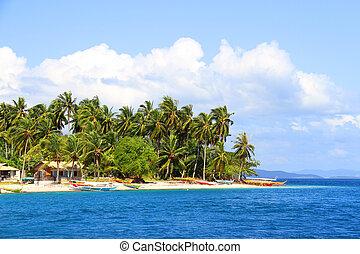 paraisos , praia tropical, com, coqueiros