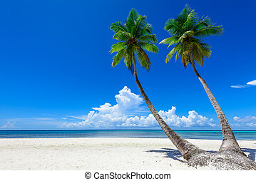 paraisos , praia tropical, palma