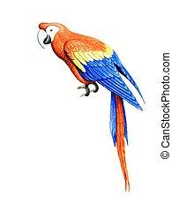 Parakeet - Drawing on paper multicolored parakeet sitting on...