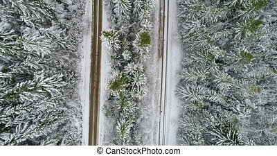 Parallel country roads in the pine forest during winter 4k -...