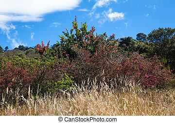 paramo, áreas, vegetación, colombia, típico