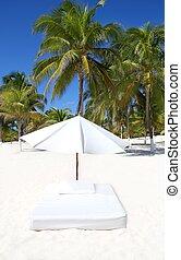 parapluie, arbres, matelas, exotique, paume, parasol, plage