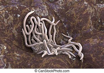 Parasitic worms, illustration