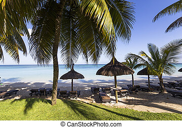 Parasols and Coconut trees on Mont-Choisy beach, in Mauritius island, indian ocean