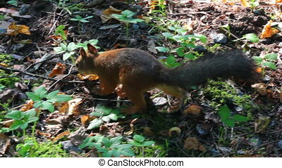 parc, écureuil