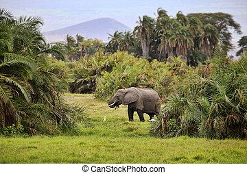 parc, éléphant