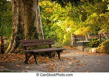 parc, énorme, arbre, banc
