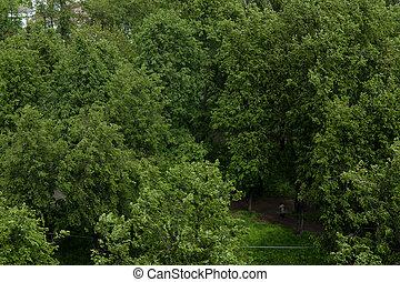 parc, été, jour arbre, ensoleillé