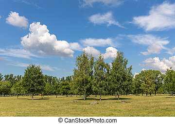 parc, été, jour ensoleillé