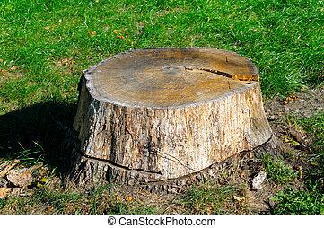 parc, été, vieux, souche, arbre
