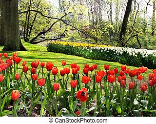 parc, étang, printemps, beau