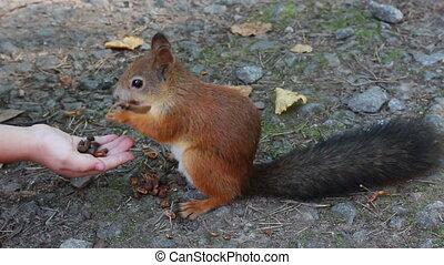 parc, alimentation, fou, écureuil
