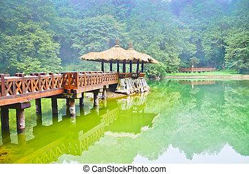 parc, amusement, taiwan, alishan, forêt
