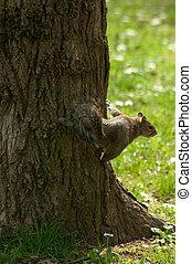 parc, arbre, écureuil