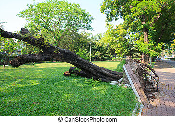 parc, arbre déraciné