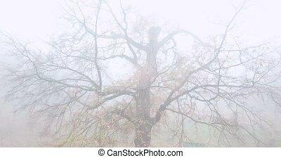 parc, arbre, solitaire, fog., nu, automne