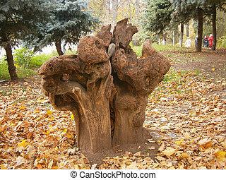 parc, arbre, vieux, souche