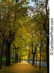 parc, automne, ruelle
