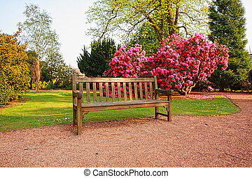 parc, azalée, vieux, beau, arbres