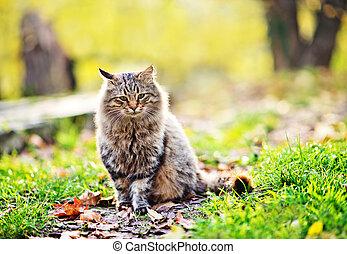 parc a chat exterieur stunning enclos extrieur pour jeunes animaux with parc a chat exterieur. Black Bedroom Furniture Sets. Home Design Ideas
