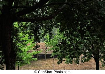 parc, chemin bois