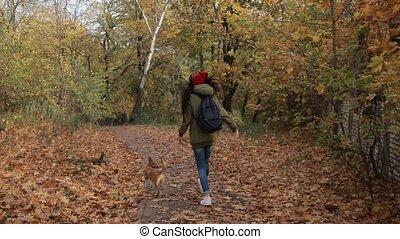 parc, chien, automne, courant, girl, joyeux