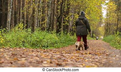 parc, chien, femme, automne