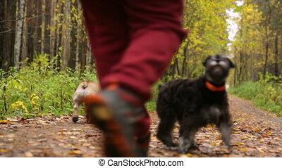 parc, chiens, femme, automne