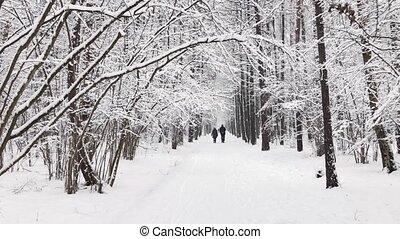 parc, chute neige