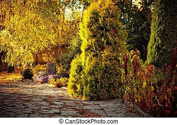 parc, coloré, feuillage automne