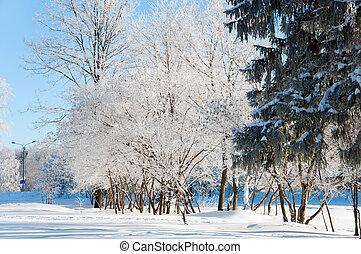 parc, ensoleillé, hiver, jour