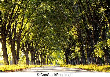 parc, ensoleillé, ruelle, arbres, jour