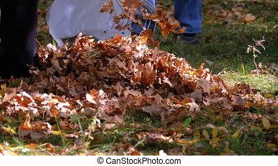parc, feuilles, râteau, ouvrier, jaune, automne, collects, utilisation, baissé