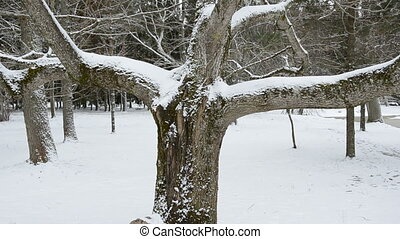 parc, hiver arbre, neige