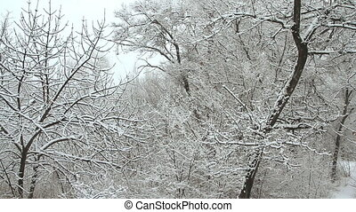 parc, hiver, chute neige, neige