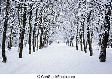 parc, hiver, neigeux