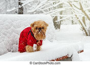 parc, hiver, promenade