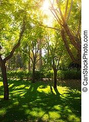 parc, jour ensoleillé, arbres
