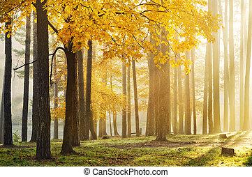 parc, levers de soleil, automne