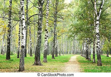 parc, matin, automne, bouleau, brume, chemin