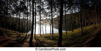 parc national, forêt, pin