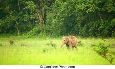 parc, national, népal, éléphants, chitwan