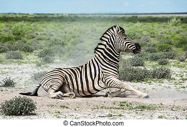 parc, national, namibie, zebra, etosha