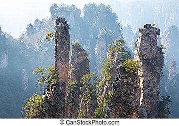 parc national, zhangjiajie, forêt