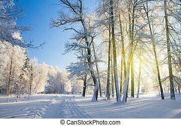 parc, neige, hiver