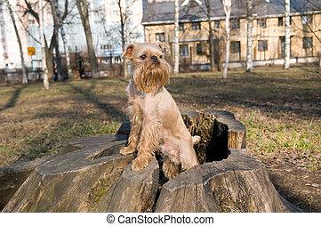 parc, promenade chien