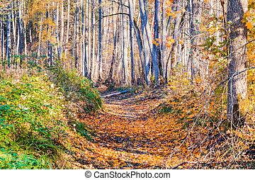 parc, ruelle, dans, les, automne